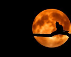 Что нужно делать на растущую и убывающую луну?