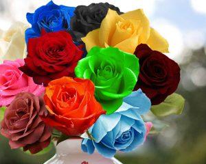 Гадание на отношение любимого на розах