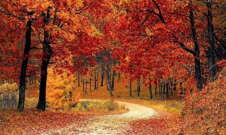 Гадание Берендеев на листьях деревьев