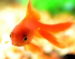 Гадание три желания «Золотая рыбка»