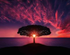 Гадание «Дерево Желаний»